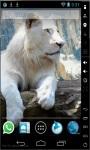 Beautiful White Lion Live Wallpaper screenshot 1/2