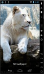 Beautiful White Lion Live Wallpaper screenshot 2/2