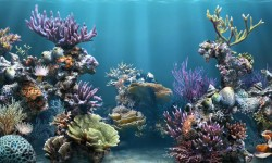 Amazing Pictures Blue Sea Coral Live Wallpaper screenshot 2/6
