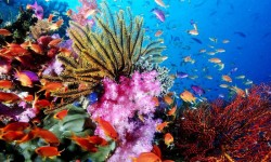 Amazing Pictures Blue Sea Coral Live Wallpaper screenshot 4/6