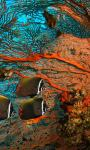 Amazing Pictures Blue Sea Coral Live Wallpaper screenshot 5/6