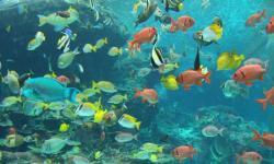 Aquarium fish wallpaper new screenshot 2/6