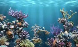 Aquarium fish wallpaper new screenshot 3/6