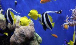 Aquarium fish wallpaper new screenshot 6/6