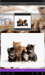 Kittens live Wallpaper  screenshot 3/5