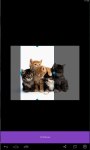 Kittens live Wallpaper  screenshot 4/5