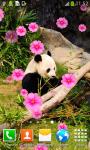 Cute Panda Live Wallpapers screenshot 2/6