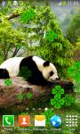 Cute Panda Live Wallpapers screenshot 6/6