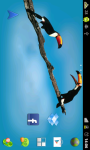 Birds Live wallpaper app screenshot 2/3