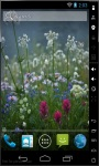 Fresh Spring Flowers Live Wallpaper screenshot 2/2