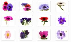 Anemone Flowers Onet Classic Game screenshot 1/3