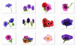 Anemone Flowers Onet Classic Game screenshot 2/3