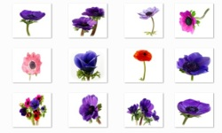 Anemone Flowers Onet Classic Game screenshot 3/3