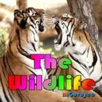 The Wild Life screenshot 1/4