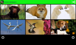 Hot Animals Wallpapers screenshot 1/6