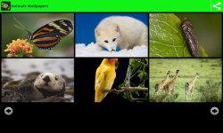 Hot Animals Wallpapers screenshot 2/6