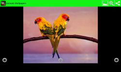 Hot Animals Wallpapers screenshot 4/6