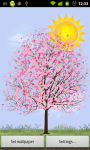 Lonely Cherry Blossom Tree LW app screenshot 1/3