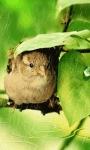 Sweet Little Bird LWP screenshot 2/3