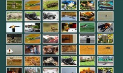 Adorable Animals Gallery screenshot 1/2