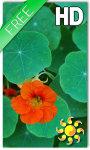 Flower Nasturtium LWP screenshot 1/2