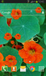 Flower Nasturtium LWP screenshot 2/2