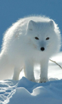 Arctic fox wallpaper screenshot 3/4