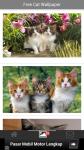Free Cat Wallpaper screenshot 2/6