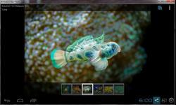 Beautiful Color Fish Wallpaper screenshot 2/6