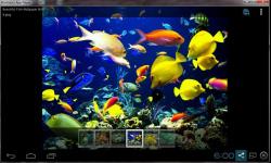 Beautiful Color Fish Wallpaper screenshot 3/6