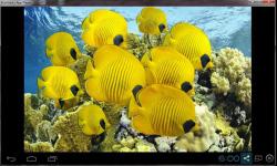 Beautiful Color Fish Wallpaper screenshot 4/6