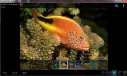 Beautiful Color Fish Wallpaper screenshot 5/6