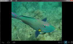 Beautiful Color Fish Wallpaper screenshot 6/6