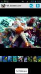 Fish HD Screensaver screenshot 1/4