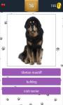 Dog Breeds App Quiz screenshot 4/5