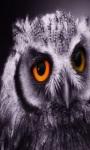 owl livewallpaper screenshot 1/1