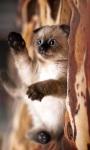 Cute Pet Cat Wallpaper screenshot 1/2
