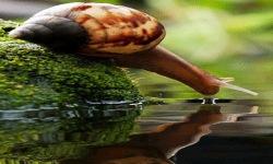 Water Snail Live Wallpaper screenshot 2/3