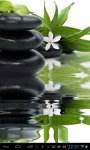 Zen lily screenshot 2/2