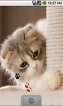 Cute Cool Kitty Live Wallpaper screenshot 2/5