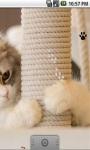 Cute Cool Kitty Live Wallpaper screenshot 3/5