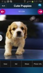 Free Cute Puppies Wallpapers screenshot 3/3