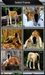 Tiger Photo Montage screenshot 2/6