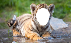 Tiger Photo Montage screenshot 6/6
