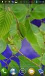 Green branches screenshot 1/3