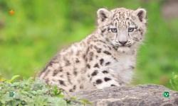 Leopard HD Wallpaper screenshot 3/5
