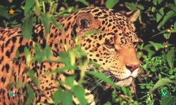 Leopard HD Wallpaper screenshot 4/5