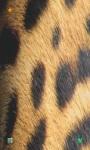 Leopard HD Wallpaper screenshot 5/5