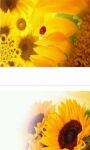 Ladybug on sunflower wallpaper HD screenshot 3/3
