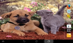 Dogs VS Cats Wallpaper screenshot 3/6